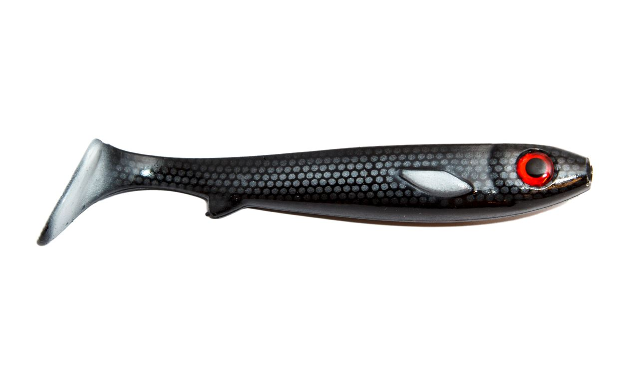 Picture of Flatnose Shad - Laban