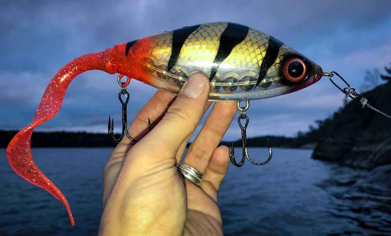 Picture of Guppie - Transparent Perch