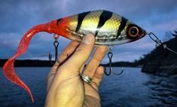 Bild på Guppie - Transparent Perch