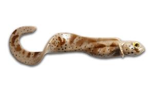 Picture of Nettel Laken - Grouper
