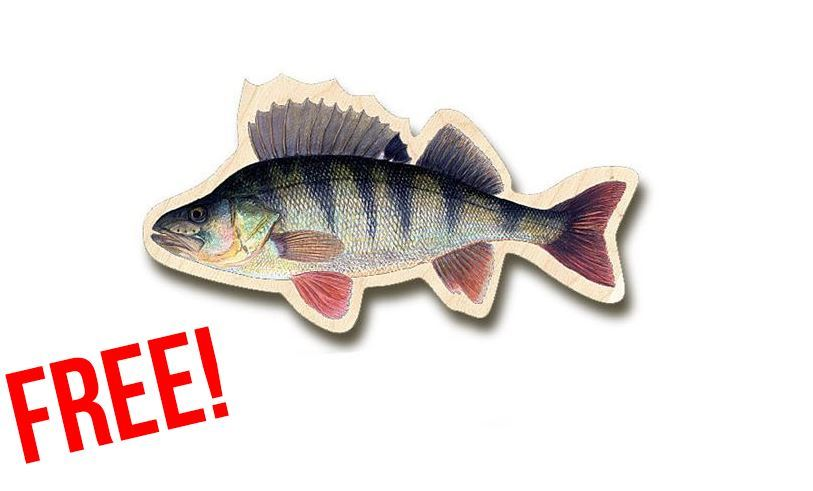 Picture of Fish magnets Perch- FREE