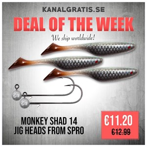 Picture of Bundle with Monkey Shad 14 (Real Roach) and jigheads!